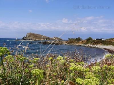Centuri port de pêche Cap Corse (1)