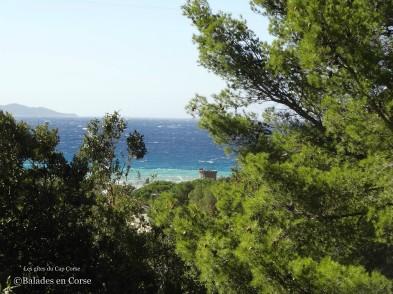 Les gîtes du cap Corse Balades en Corse (2)