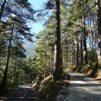 Vizzavona forest (2)