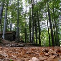 Vizzavona ND de la forêt